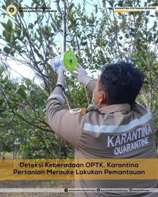 Deteksi Keberadaan OPTK, Karantina Pertanian Merauke Lakukan Pemantauan